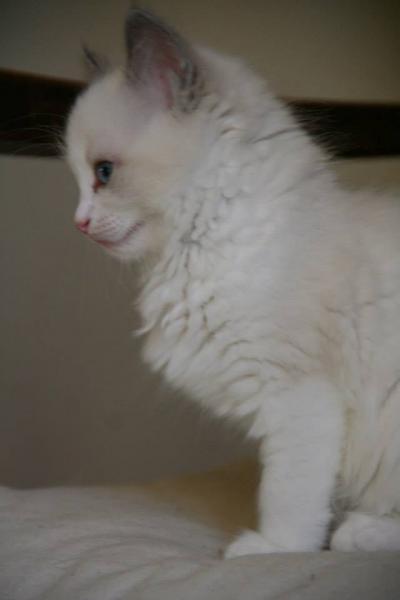 Le profil de Lilly