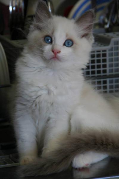 Les yeux de Lilly