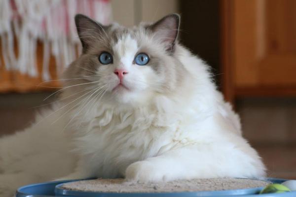 Les yeux de Nathou