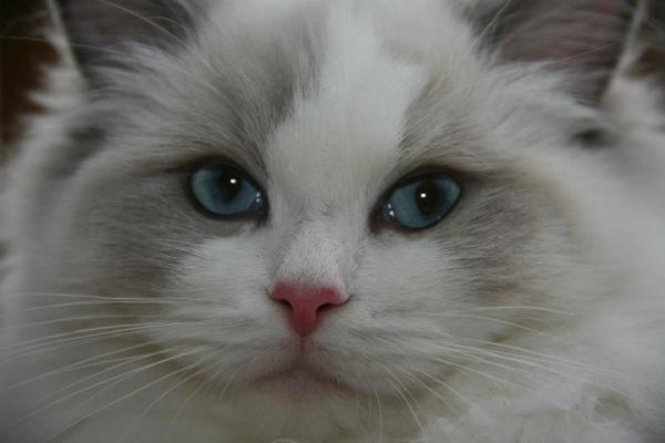 Les yeux d'Haloa