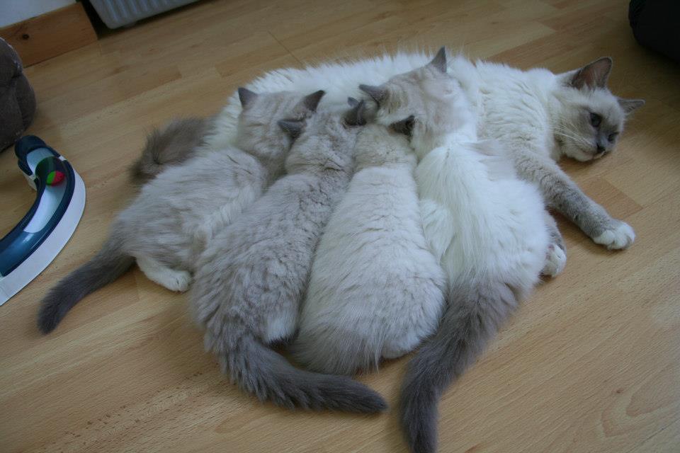 Asia avec ses premiers bebes