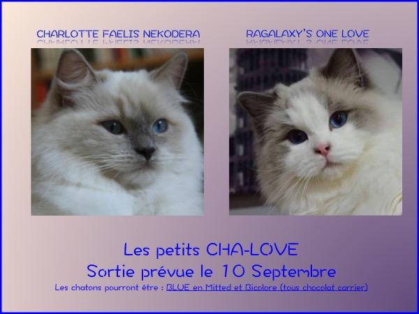 Charlotte One Love