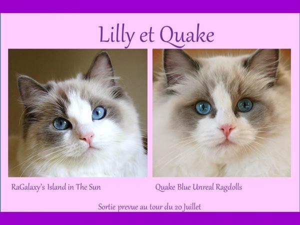 Lilly quake